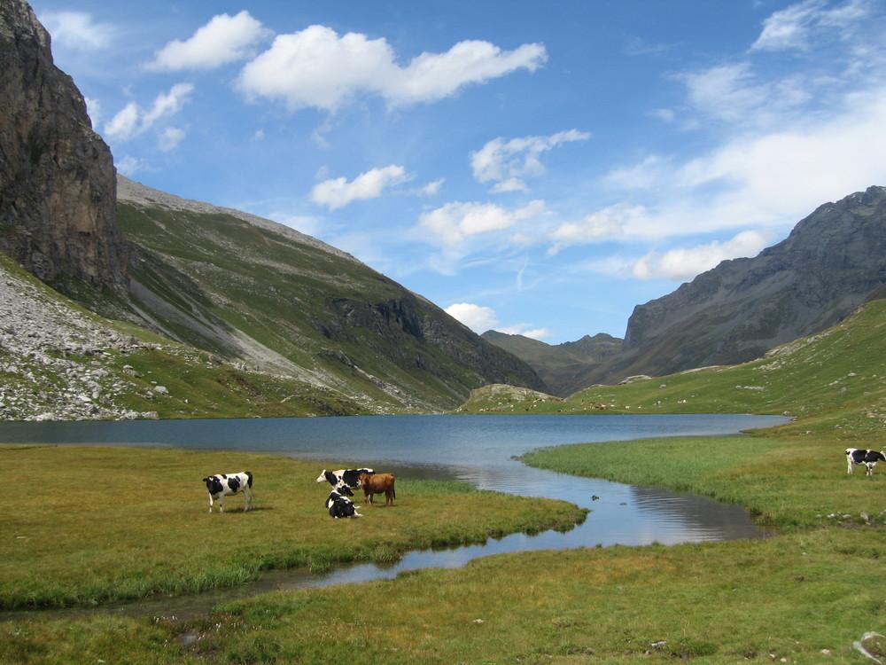 Lac de la Plagne - 2144 m d'Alt. (Savoie)