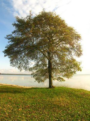 Lac de lacanau (gironde)
