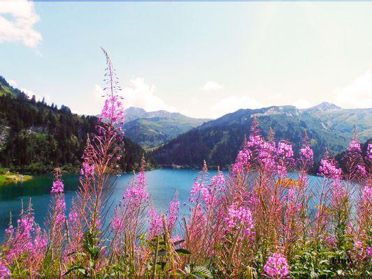 Lac de Savoie