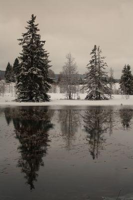 lac des ROUSSES (39)