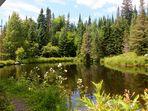 Lac en forêt