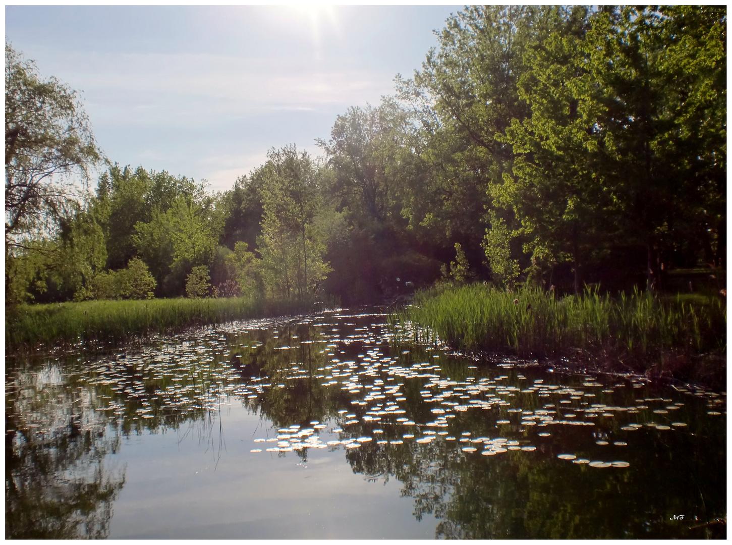 Lac en habit de soirée