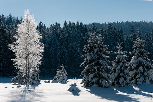 Lac Genin sous la neige
