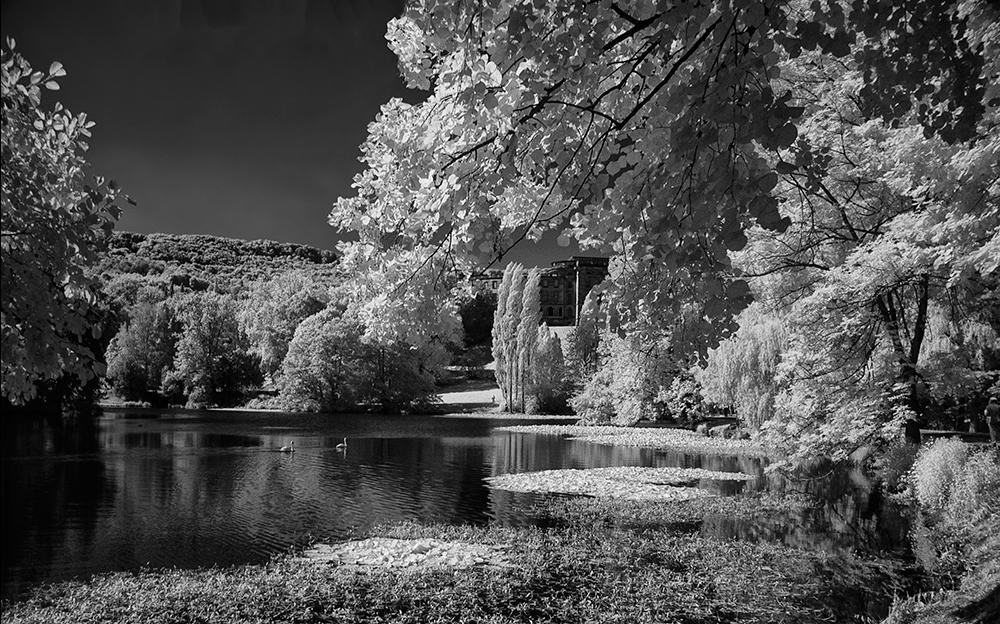 Lac mit Schwänen II