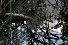lac noir 6