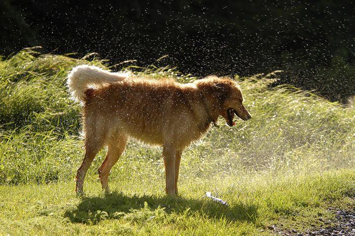 Lachender nasser Hund