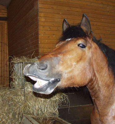 """""""Lachendes"""" Pferd"""