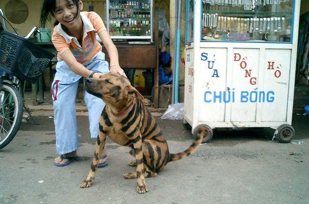 (lack)tiger