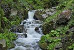 L'acqua è la vita....