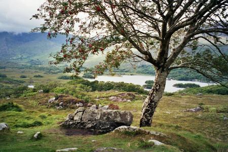 Ladies' View Killarney