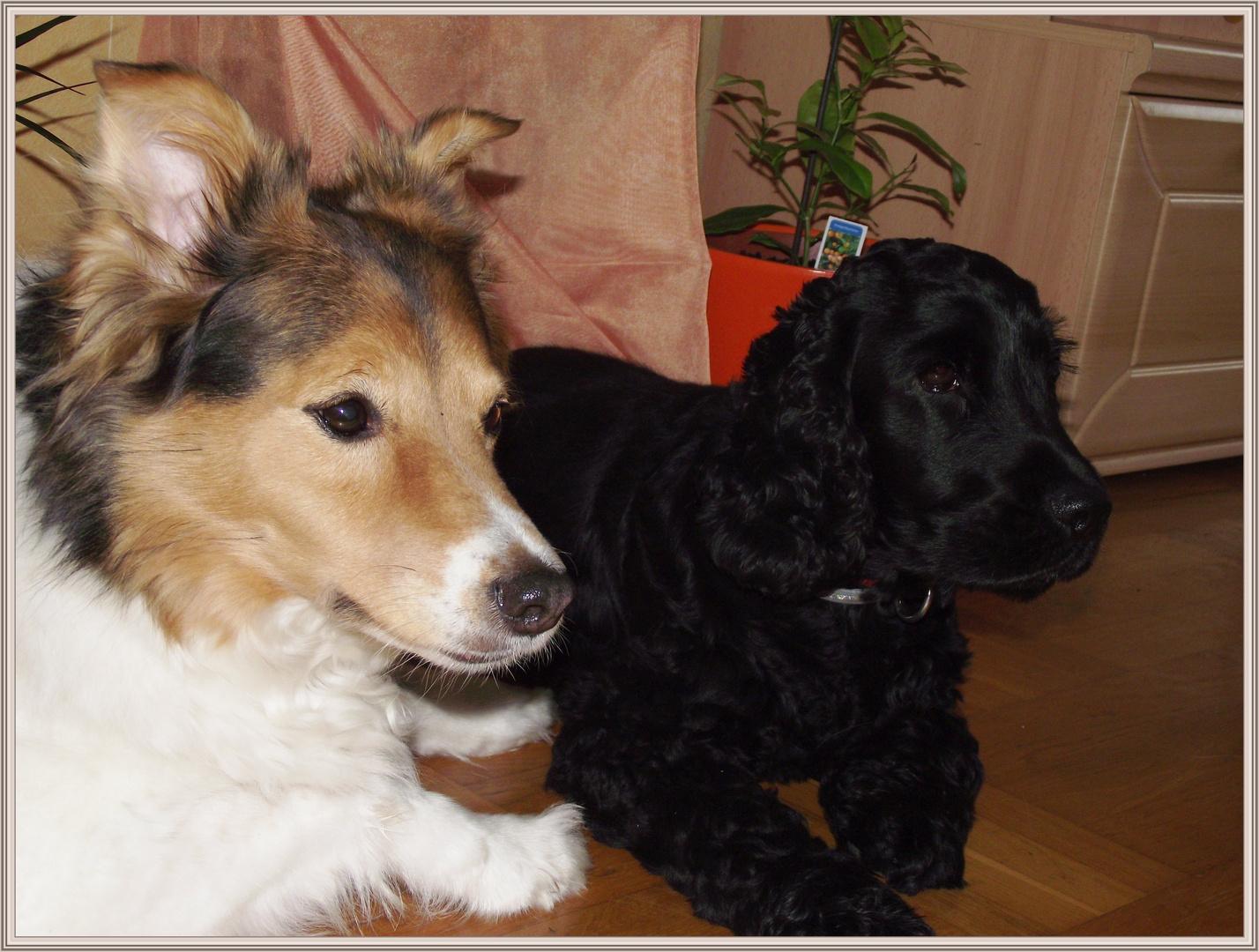 Lady und Sammy
