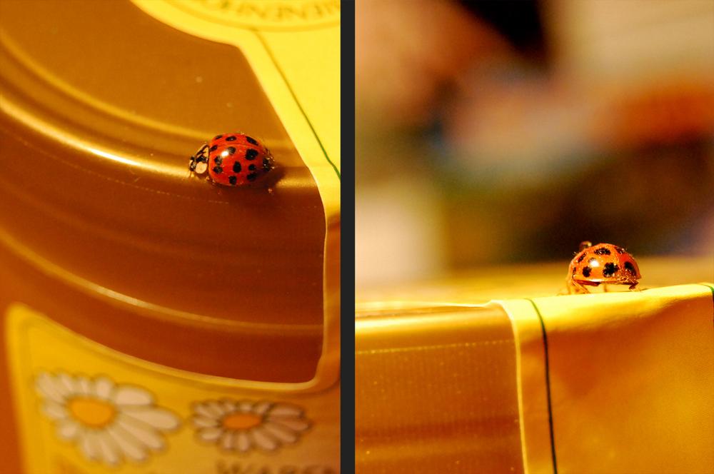 .ladybird.