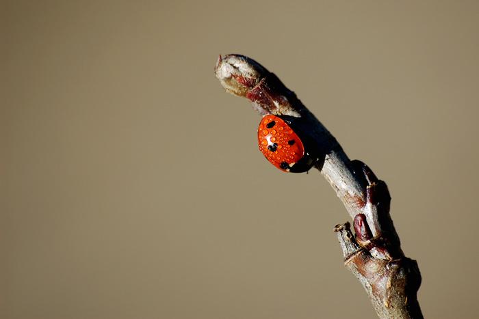 ladybird warming up