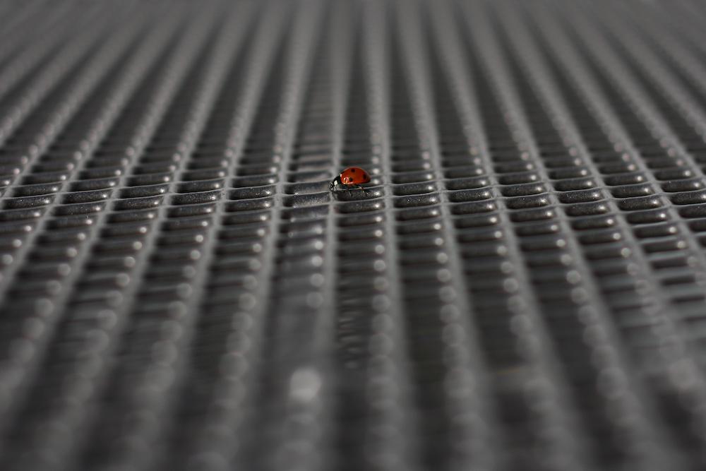 Ladybug Chase