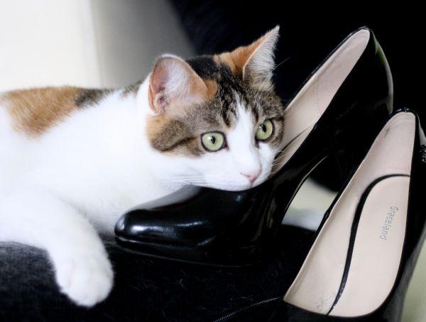 Ladycat