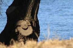 Lächelnder Baum?.
