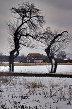 lästernde Bäume im Winter (ham ja sonst nischt zu tun)