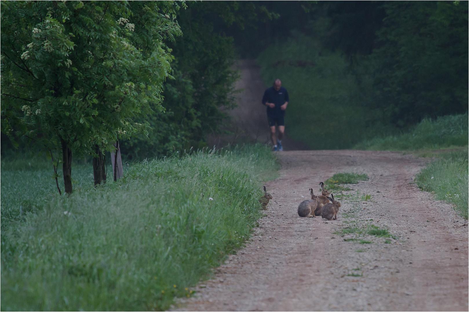 Läufer am Morgen