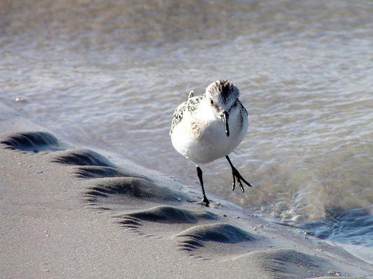 Läuft am Strand