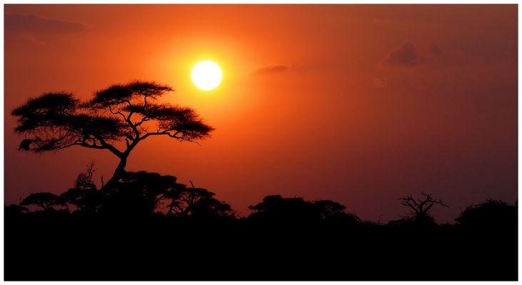 L'Afrique ........juste Afrique