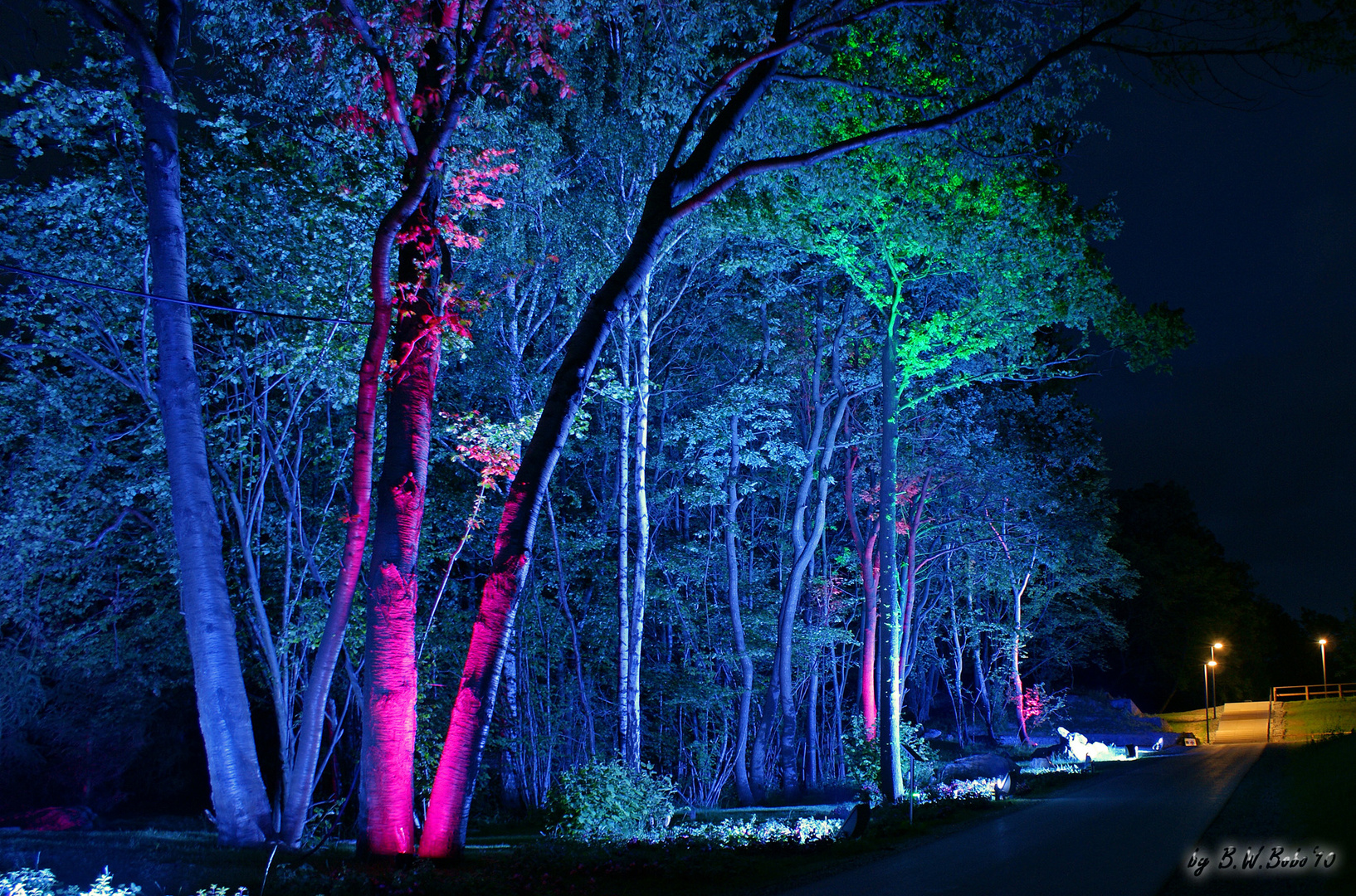 LAGA 2010 - Lichtspiel in den Bäumen
