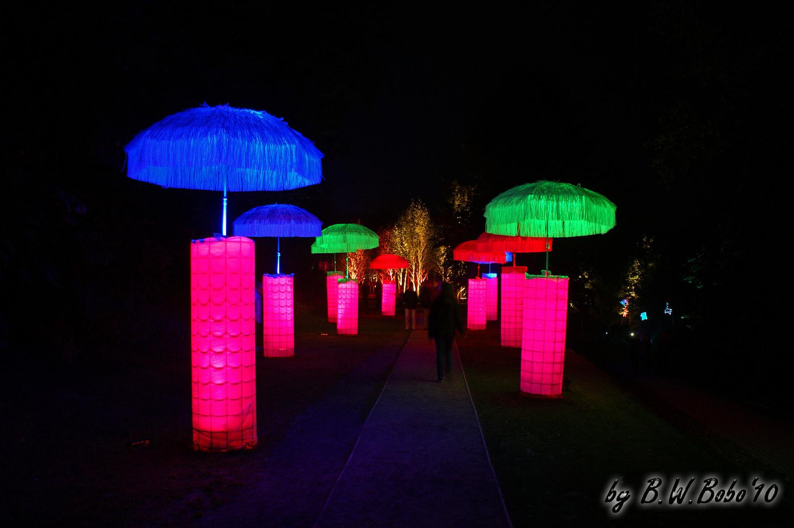 LAGA 2010 - Schirme bei Nacht