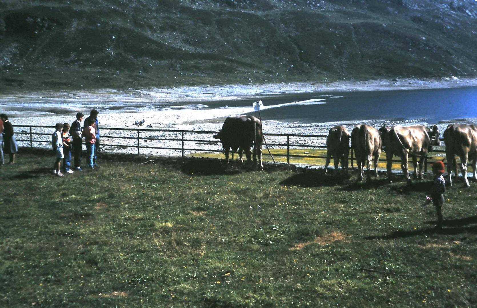 Lago di Montespluga - 1988