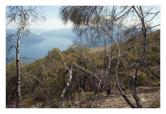 Lago Maggiore con betulle