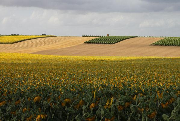 L'agriculture en Charente-Maritime