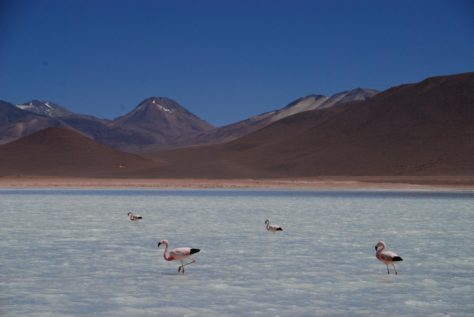 Laguna Blanca, Atacama Desert