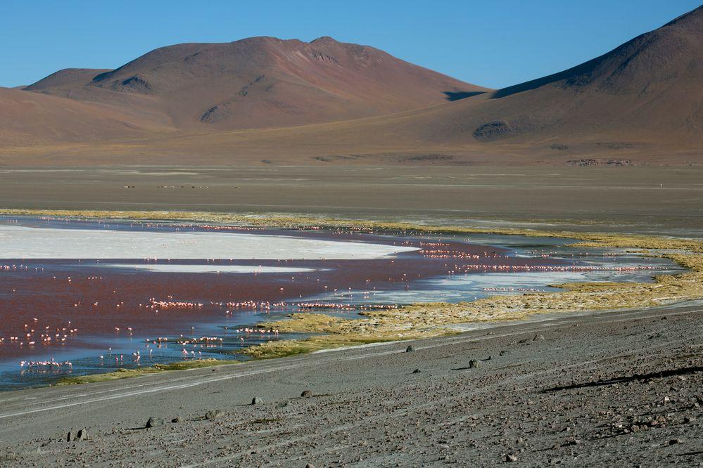 Laguna Colorada Bolivien 4278m