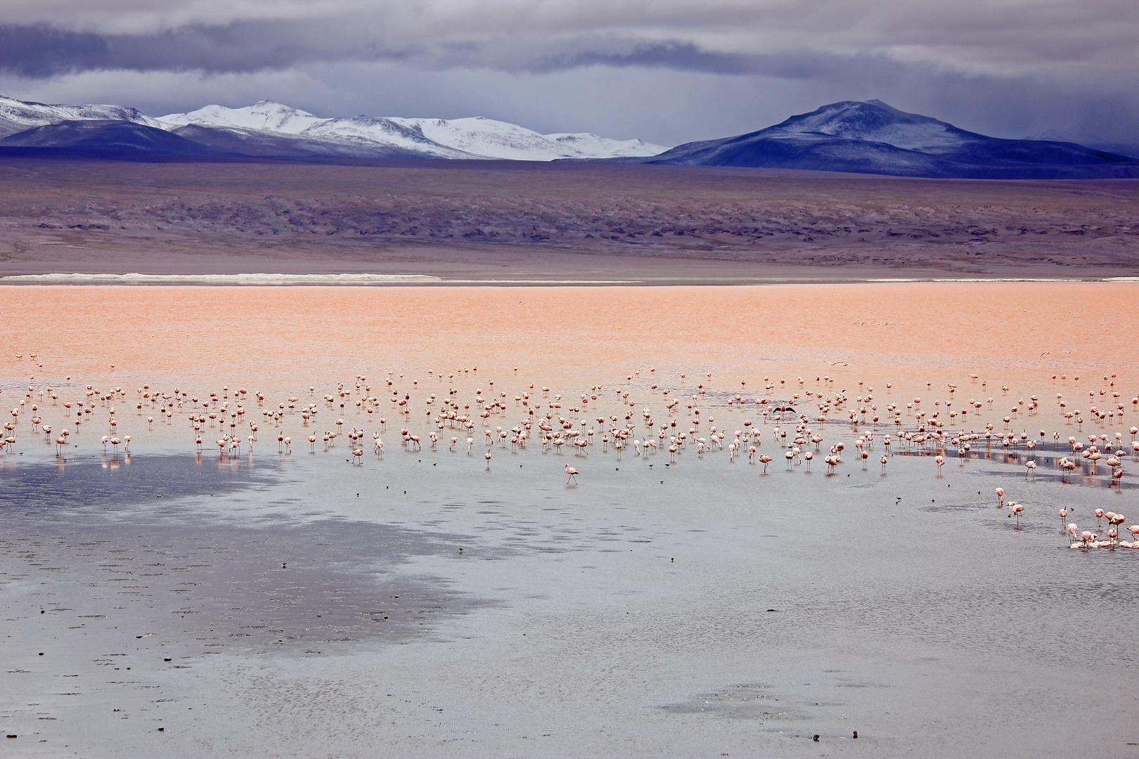 Laguna Colorada- Bolivien