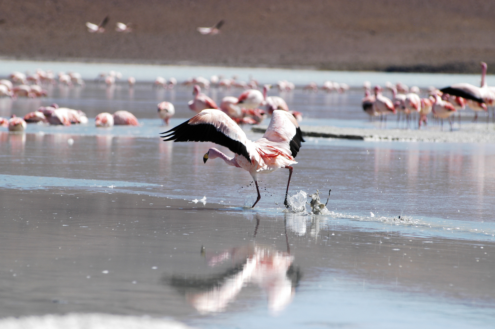 Laguna colorada et flamants roses