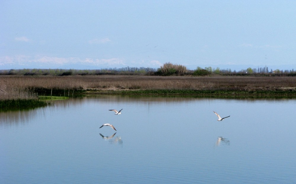 Laguna di Venezia - Valli della Brussa