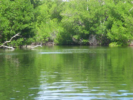Laguna la Arestinga