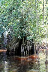 lagune et palétuvier