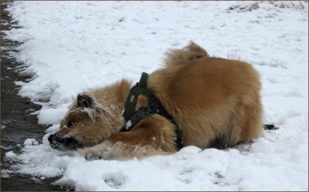 Laima im Schnee