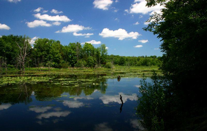 Lake #5