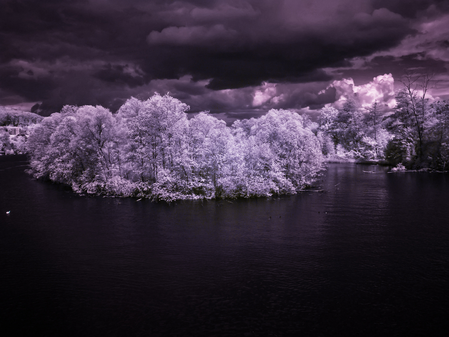 Lake island infrared in Purpel