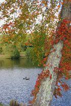 Lake Louise, Weaverville, NC