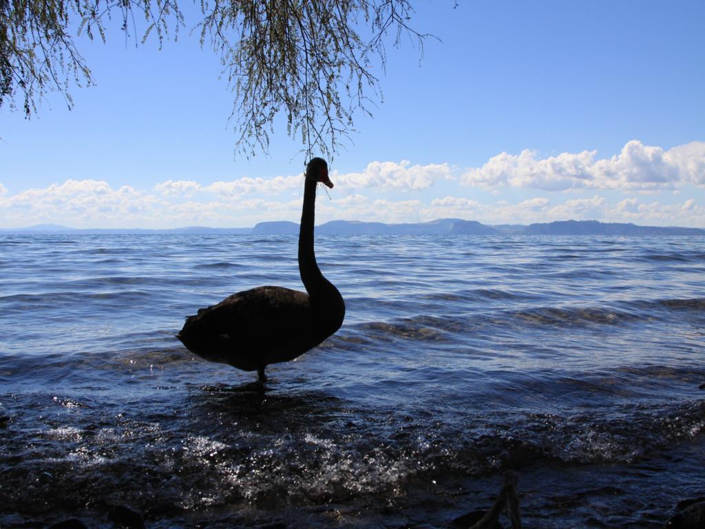 Lake Taupo (Nordinsel/Neuseeland)