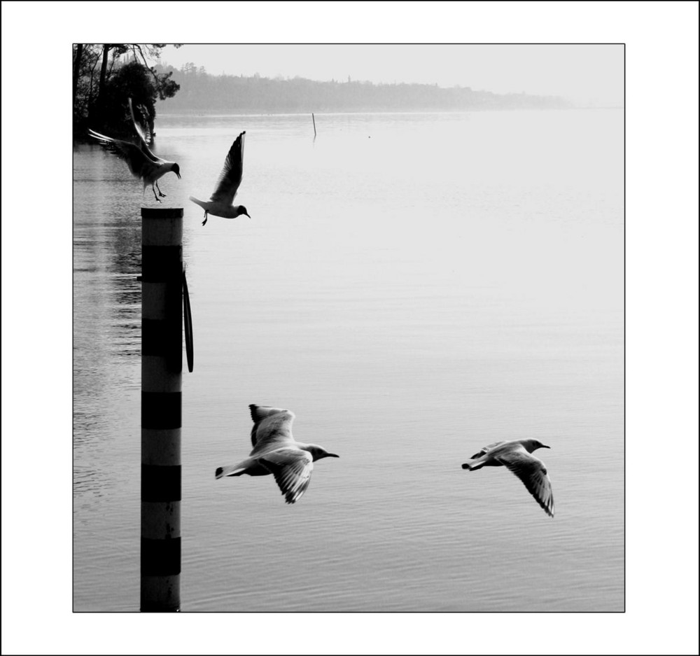 Lake Visions #4