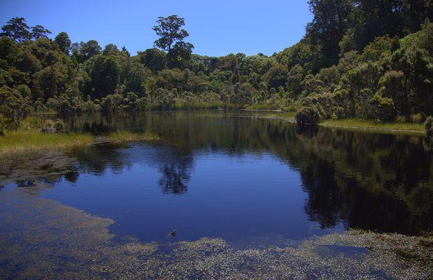 Lake Wilkie (Catlins)