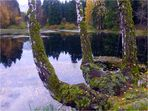 Lakenhausteich im Solling
