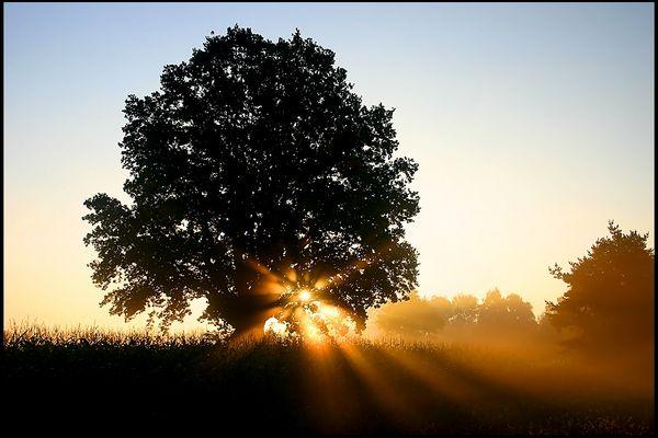 lakeside dawn tree