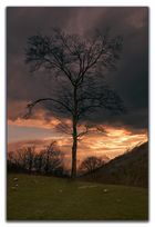 l'albero all'imbrunire