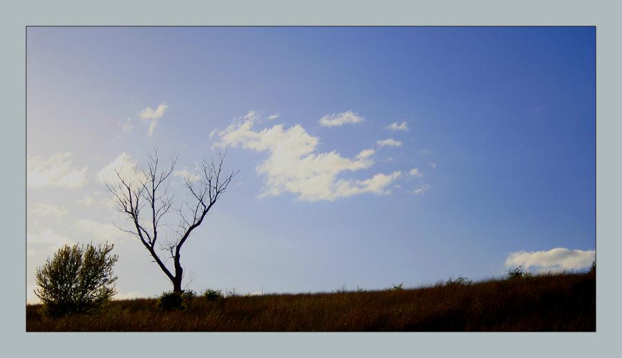 L'albero degli zecchini