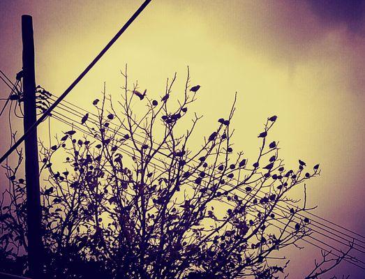 L'albero di uccelli