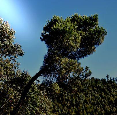 L'albero e il vento