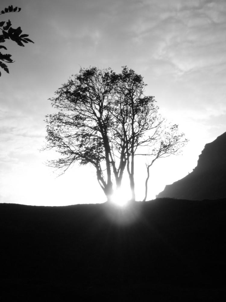 l`albero nero...